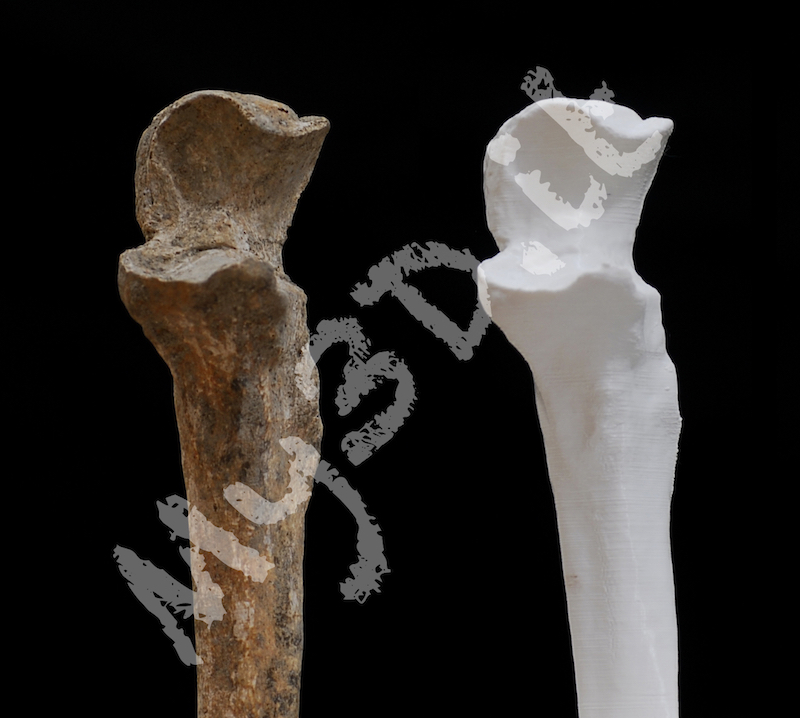 _DSC5302-ancient-human-bone-2-wm-my3d-800.jpg